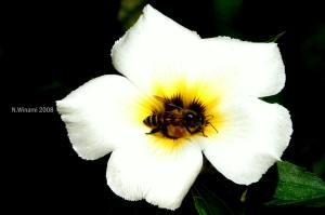 Bee_P1010652_edit2